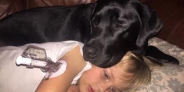 Куче спаси живот на дете, ја разбудил мајката кога му паднало нивото на шеќер во крвта