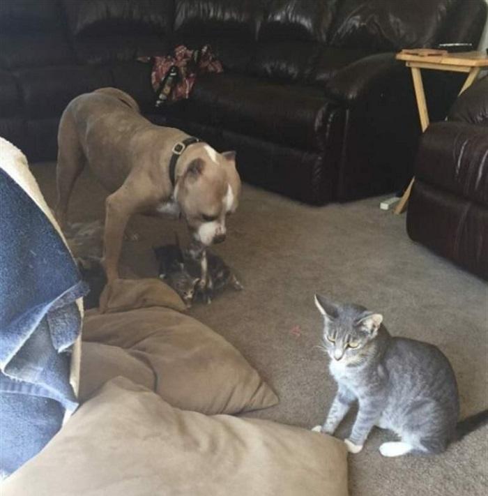 Посвоиле питбул, но кучето постојано било тажно- кога се појавиле тие, се се променило